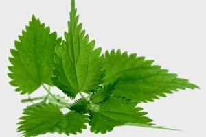 Zdravstveno piće: biljni čajevi za snižavanje krvnog tlaka - Komplikacije -