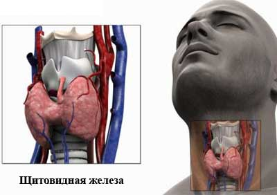 hipertenzija na chichagov)