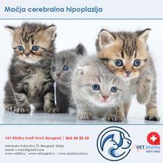 hipertenzije i hipoplazija)