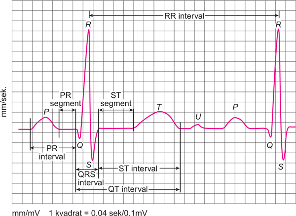 ekg pokazuje da je hipertenzija