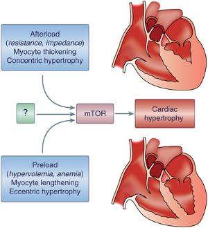 sputum hipertenzije)