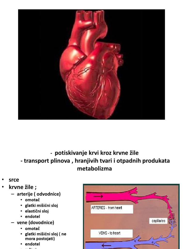 kapilare i hipertenzija)