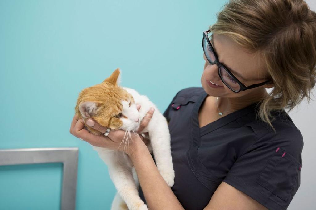mačke liječenje hipertenzije postupci hipertenzija disanja