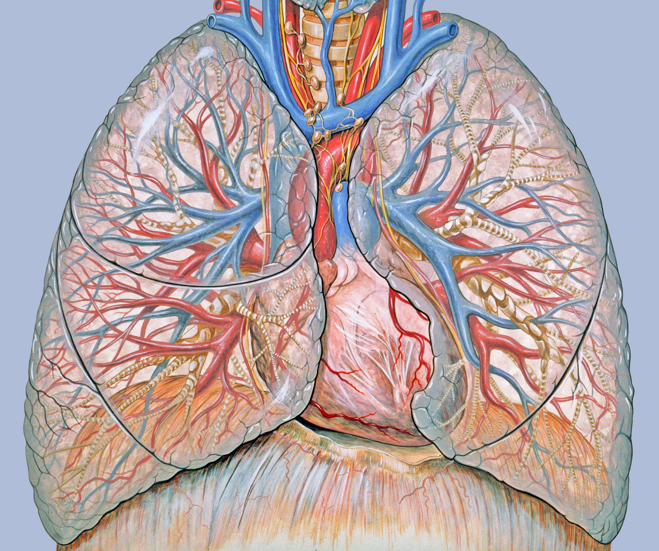 Bolesti hipertenzije, frakcija asd-2 u hipertenziji