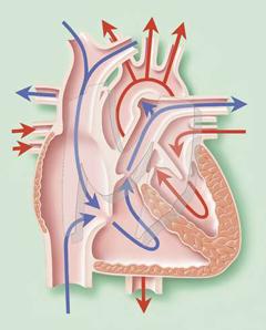 koliko tekućine piti s hipertenzijom)
