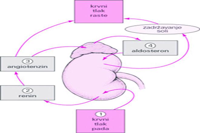 cijeli trbušne hipertenzija)