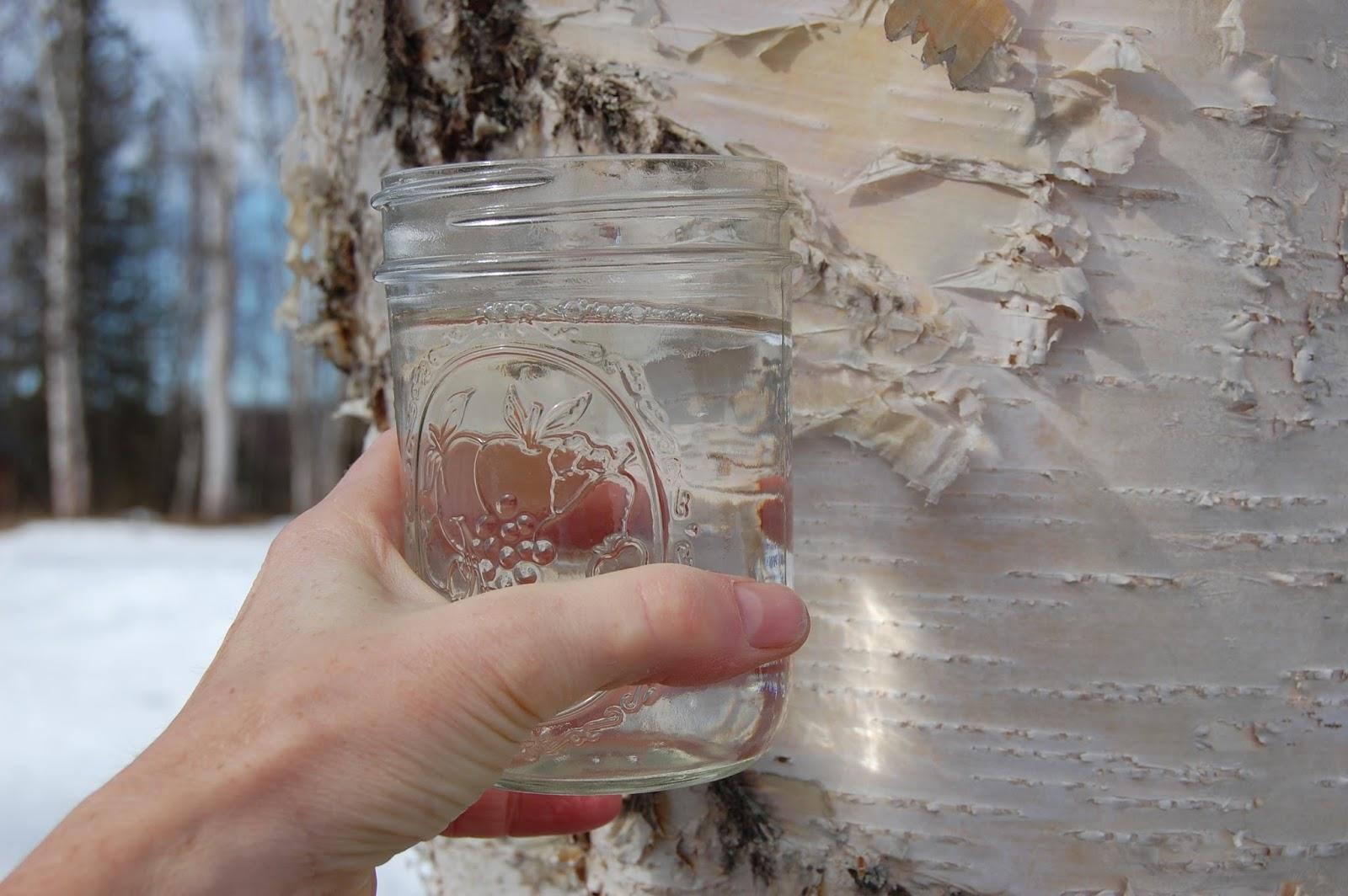 breza sok i hipertenzije