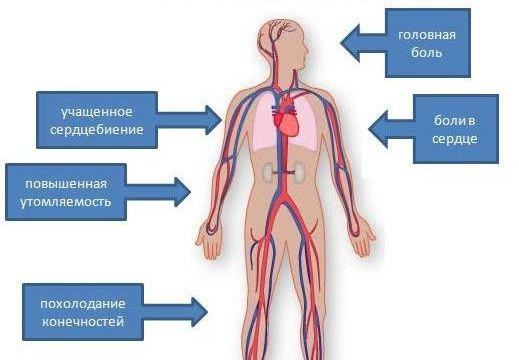 aralia hipertenzija)