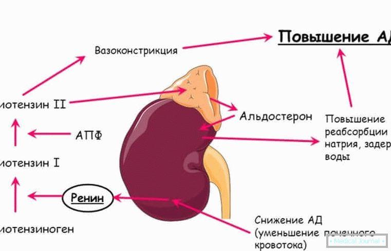 hipertenzija je angiotenzin 2