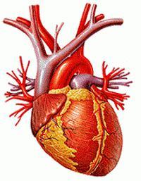 Hipertenzija 1, 2, 3 i 4 stupnja
