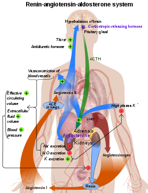 hipertenzije i hipertenzivna kriza)