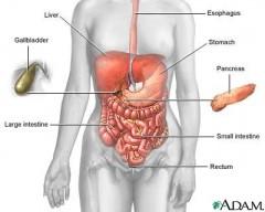 Hipotenzija i hipertenzija žučnog mjehura