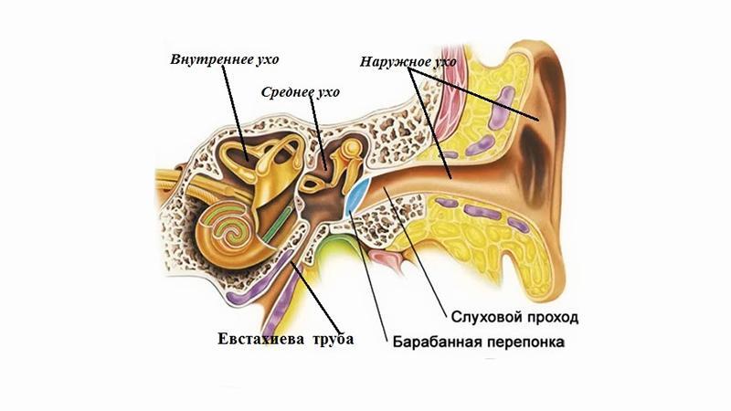 Često postavlja uši: uzroke i liječenje - Nos February