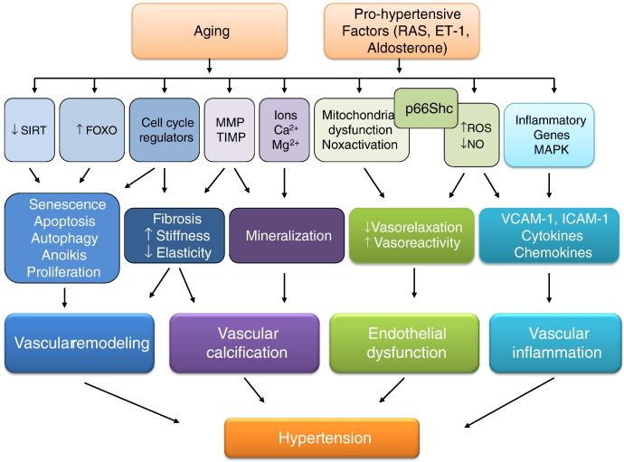 vaskularne s hipertenzijom)