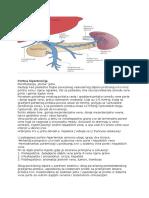 fiziološke hipertenzija flexors