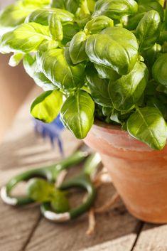 Aloe vera gel – njega kože, konzumiranje i recepti