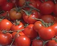 upotrijebiti rajčice od hipertenzije)