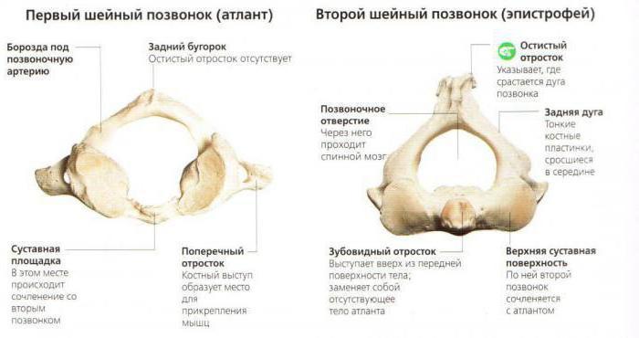 hipertenzija i cervikalni kralješci
