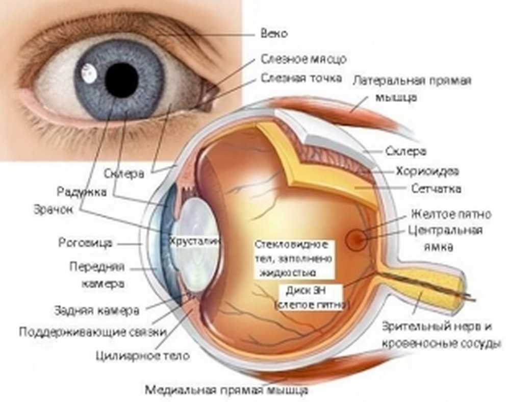 bolesti oka vaskularna hipertenzija)