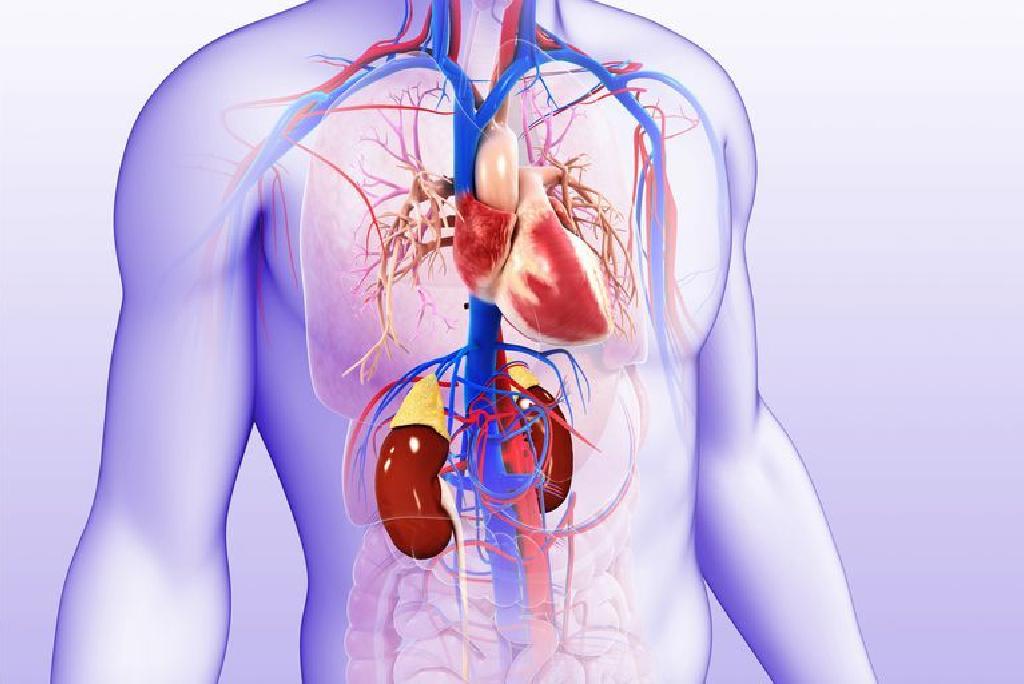 valerijana i hipertenzija kristalna struktura hipertenzije
