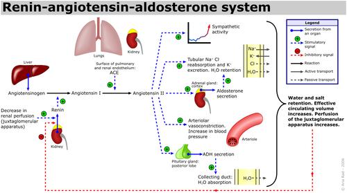 aldosterona i hipertenzija)