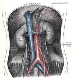 abdominalna aorta za hipertenziju)