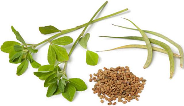 Kako skuhati žuti čaj. Helba - lijek za stotinu bolesti (žuti egipatski čaj)