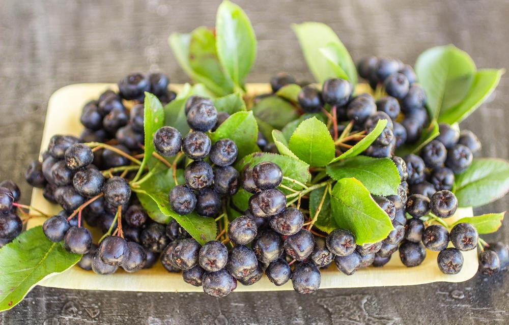 chokeberry i hipertenzija