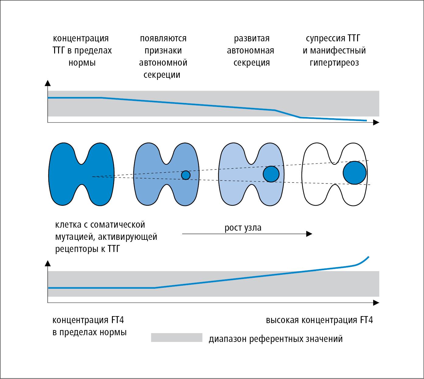 hipertenzije i hipertireozom)