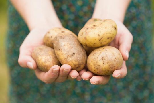 Krumpir povećava rizik od visokog tlaka   missZDRAVA