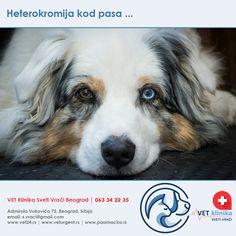 maligna hipertenzija | Struna | Hrvatsko strukovno nazivlje