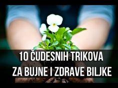 melissa od hipertenzije)
