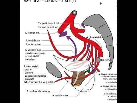 prostatitis hipertenzija