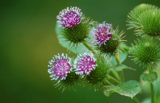 theturninggate.com - Ruski biljni preparati | Dostava na Vašu adresu