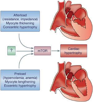 hipertenzija, krvarenje nos