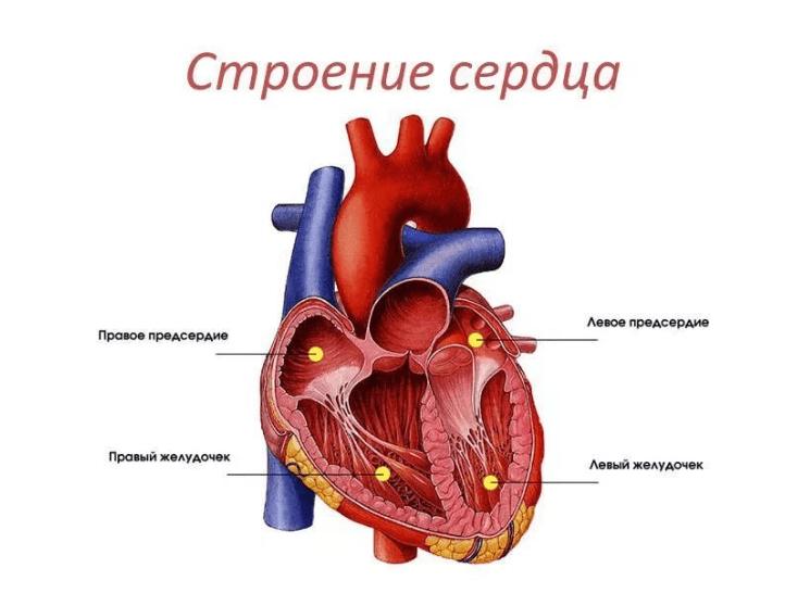 zadebljanje da interventrikularni septum u hipertenzije