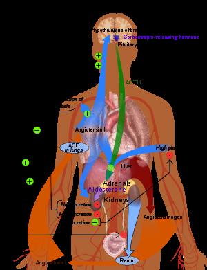 Hipertenzivna kriza